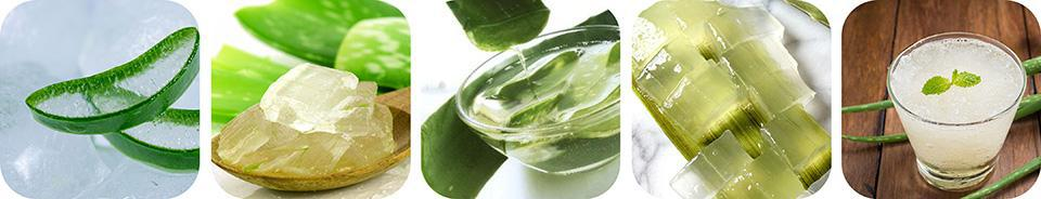 Fresh Pure Organic Aloe Vera Leaves