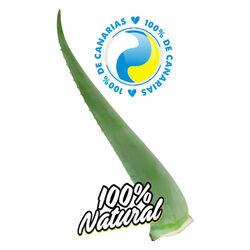 Hoja Aloe Vera Canario Penca Zabila Super Premium